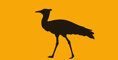 Bustards Birding Tours